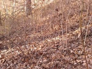 1-10-2015_twigs